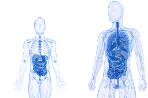 Viszeralchirurgie Kompakt: Oberer Gastrointestinaltrakt - BDC|Online